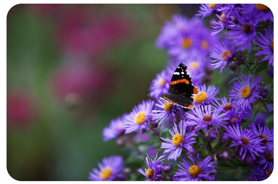 butterflies_0637
